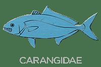 Carangidae