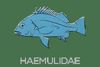 Haemulidae