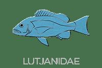 Lutjanidae