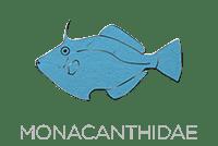 Monacanthidae