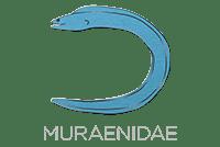 Muraenidae