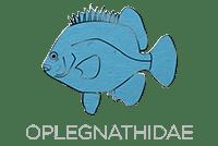 Oplegnathidae