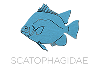 Scatophagidae