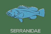 Serranidae