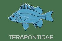 Terapontidae